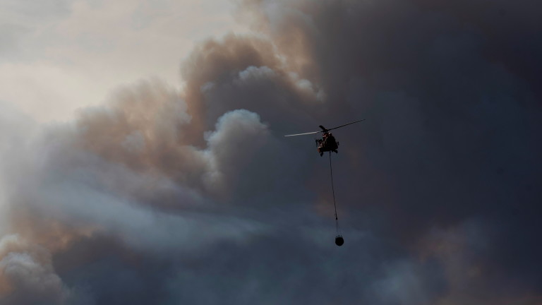 Up to 6,500 hectares burnt in forest fire